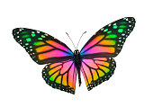 Monarch Butterfly in Rainbow Colors Isolated On White