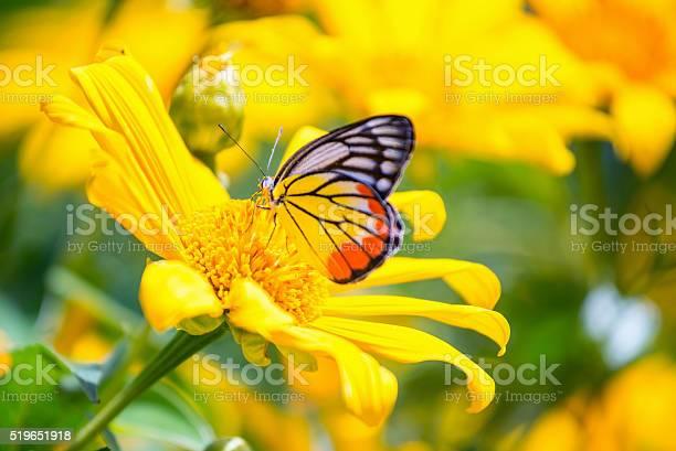 Monarch butterfly in sunflower flower macro closeup picture id519651918?b=1&k=6&m=519651918&s=612x612&h=y42igvsjwmvlai5iez3v9gawdkl51ulvvfnmsiesd6o=