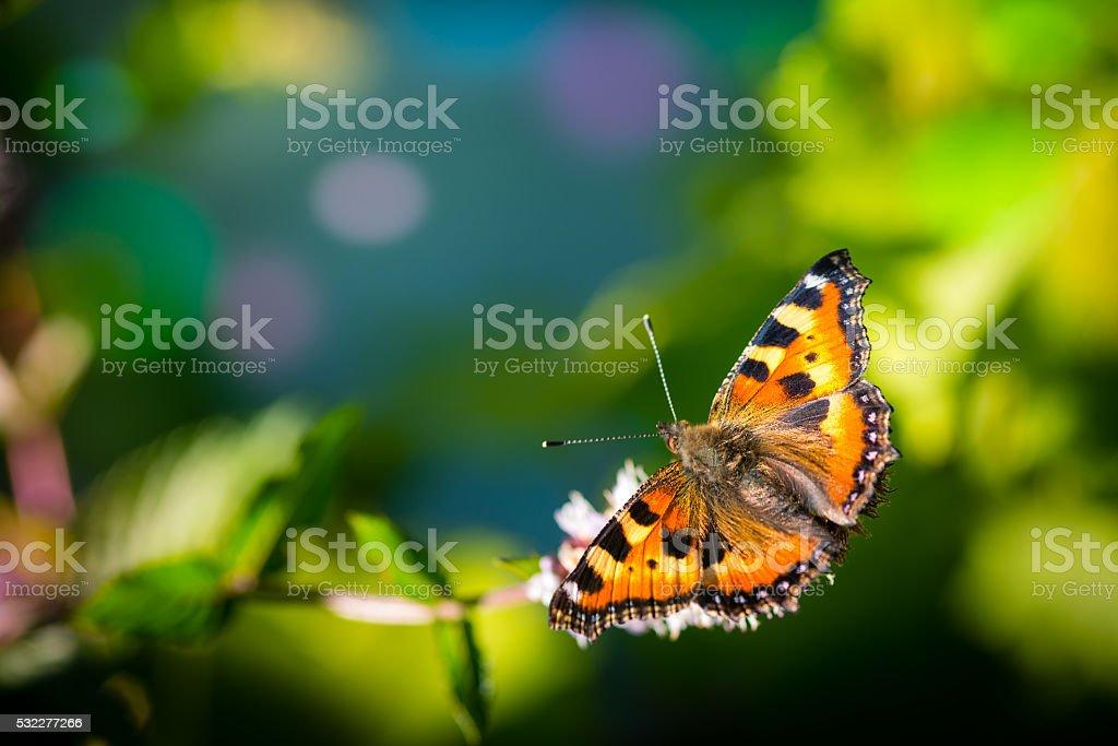 Borboleta monarca em flores - foto de acervo