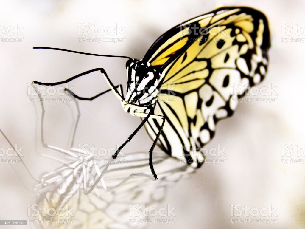 Monarch butterfly on a glass stock photo