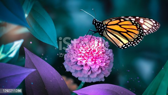Monarch butterfly on pink flowers in a fairy garden. Summer spring background.