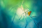 A monarch butterfly with orange and black wings perched on a tree branch. Soft and dreamy bokeh background.