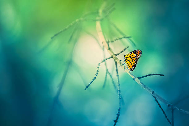 Monarch butterfly on tree branch with bokeh background picture id511857966?b=1&k=6&m=511857966&s=612x612&w=0&h=0dkdug8rdksv32harf oeffwzygz4e2wusolufiutgg=