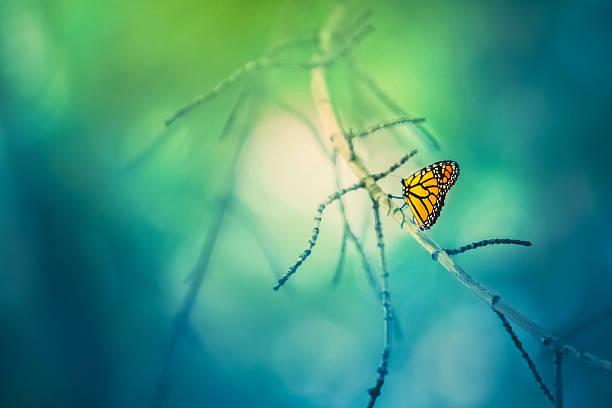 farfalla monarca su albero ramo con sfondo bokeh - farfalla ramo foto e immagini stock