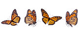Isolated Monarch Butterflies Banner.