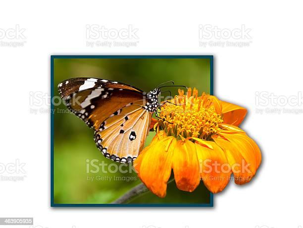 Monarch butterfly picture id463905935?b=1&k=6&m=463905935&s=612x612&h=gfvwu0mfqq8nd2pkospu8p6rq2gzfjz5ylahb9gmavk=