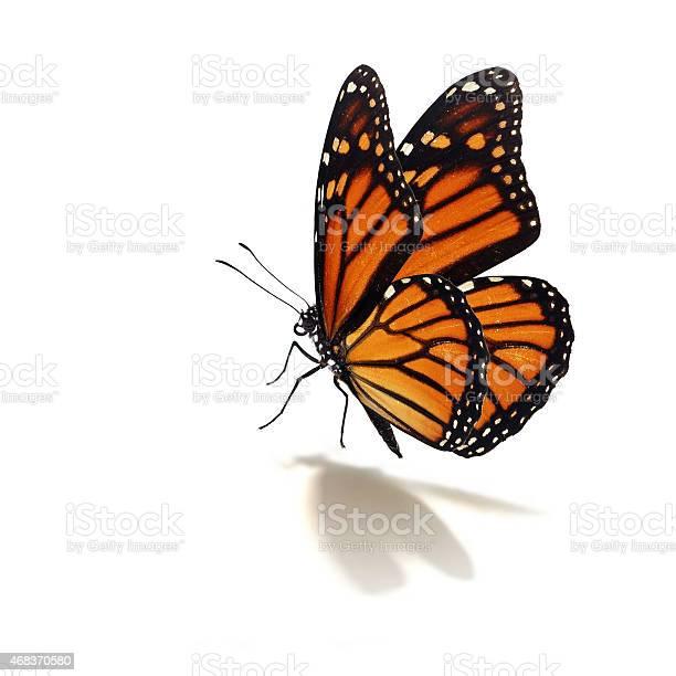 Monarch butterfly picture id468370580?b=1&k=6&m=468370580&s=612x612&h=e rr7gceoeithjubm2tco5uplvbvsj7miimcj33yxsc=