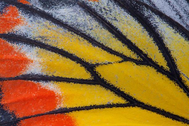 Monarch butterfly wing picture id525625981?b=1&k=6&m=525625981&s=612x612&w=0&h=r vpd5xqqcfpcep7ijutavwjmhgqkyloivrkmedaqwq=