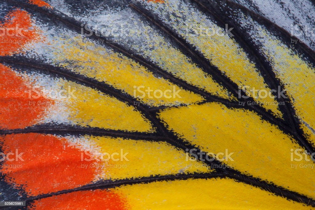 Monarch Butterfly Wing stock photo