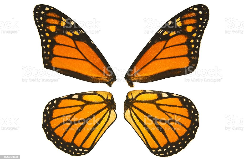 Monarch butterfly wings royalty-free stock photo