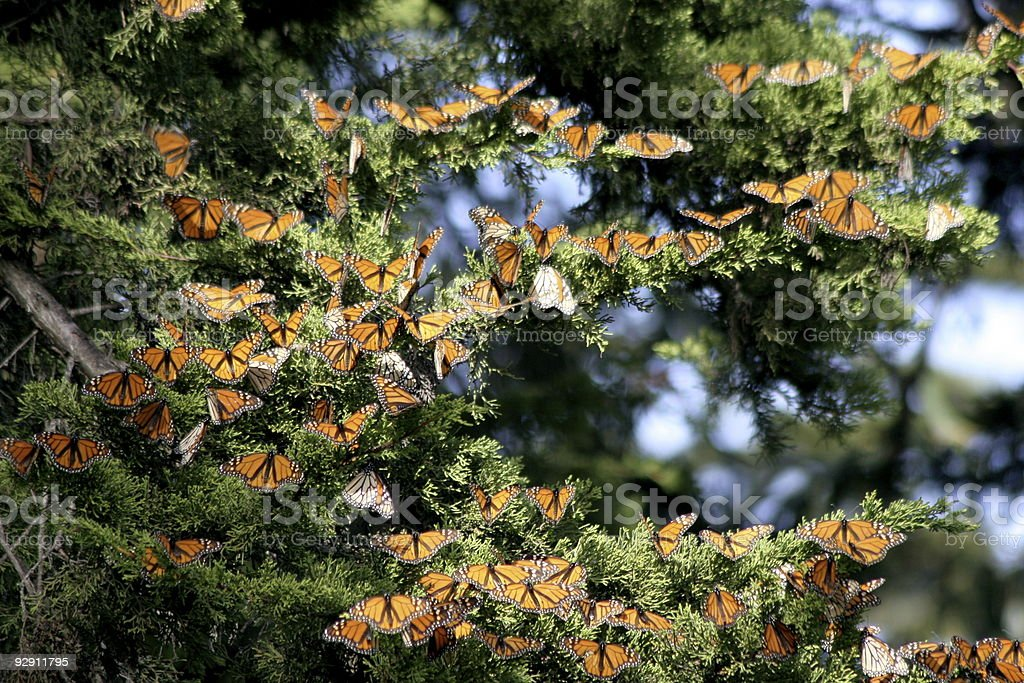 Monarch Christmas Tree Decorations stock photo