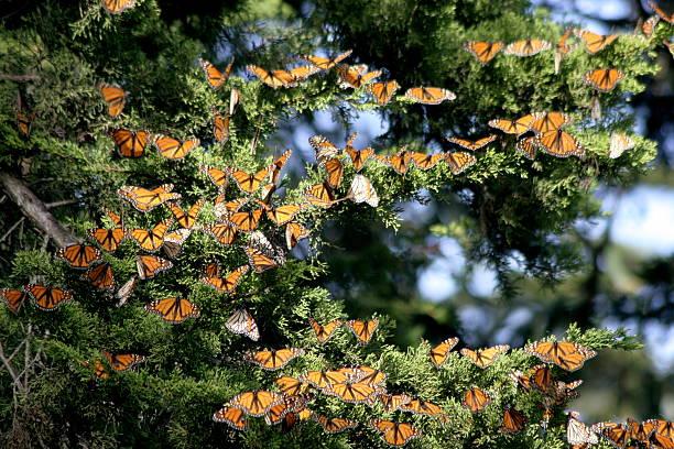 Monarch Christmas Tree Decorations stock photo