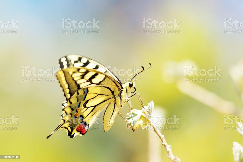 Bunte Schmetterling sitzt auf Blume – Foto
