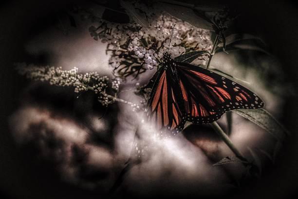A Monarch in the Garden stock photo