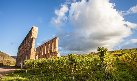 Monastery ruin Suben and Moselle vineyards  Germany in the autumn