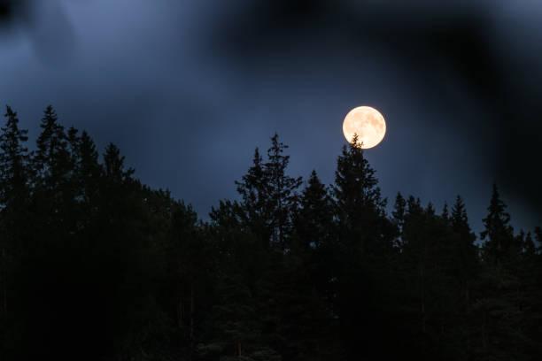 Mondaufgang Über Den Bäumen von Schweden – Foto