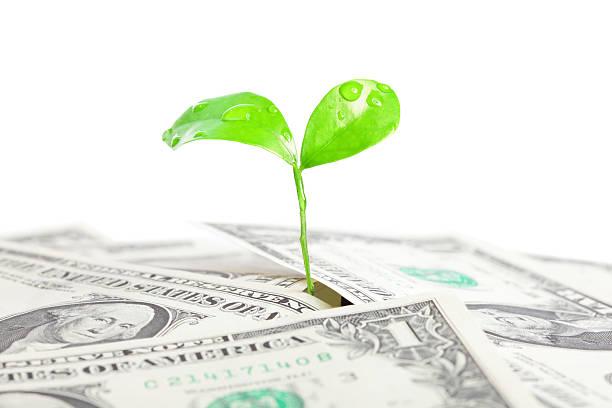 Geld und Grüne Pflanze – Foto