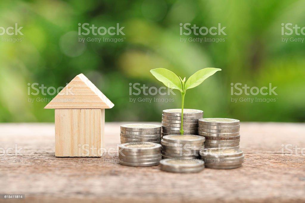 Money and plant, Saving money concept, concept of financial savi stock photo