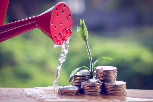 Money And Plant With Hand Stock Photo - Download Image Now