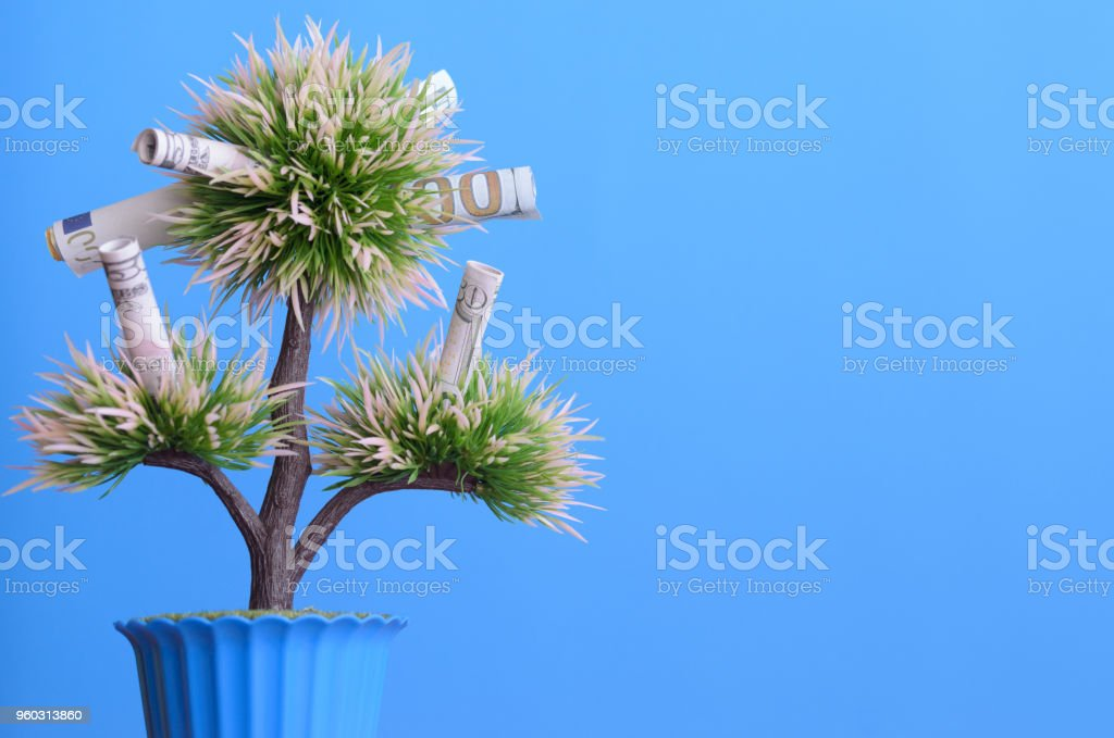 Money bills on the branches of a money tree on a blue background. stock photo