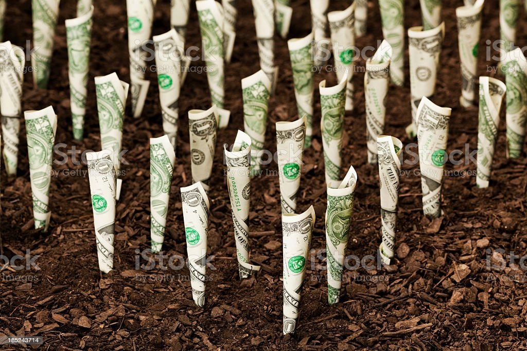 Money crops stock photo