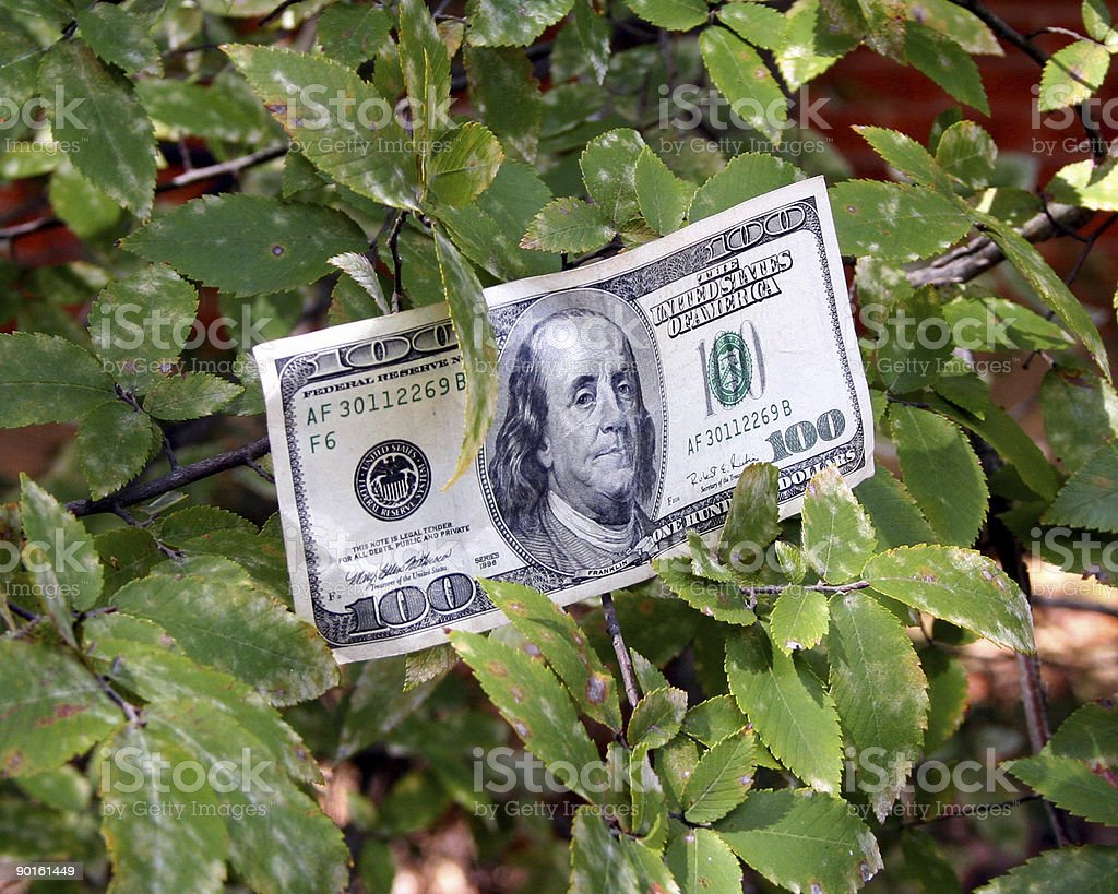 Money Does Grow on Trees royalty-free stock photo