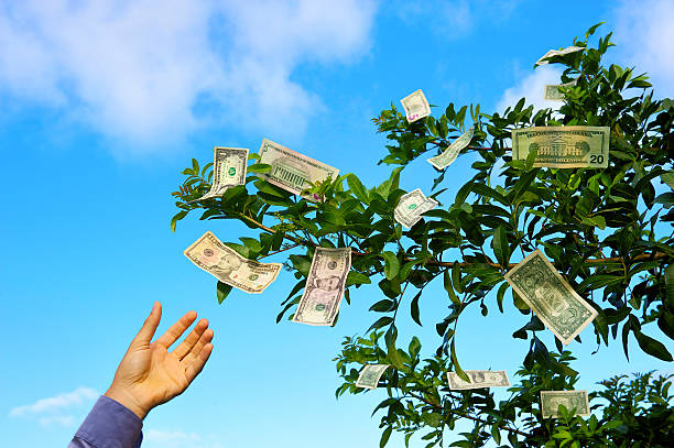 Money Doesn't Grow on Trees Cash bills hang in the leaves of a tree against a blue sky while a hand reaches up to pick one money tree stock pictures, royalty-free photos & images
