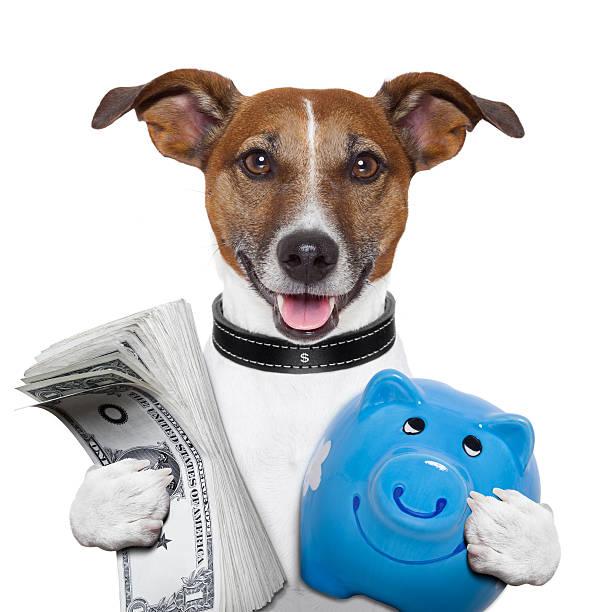 Money dog picture id178536812?b=1&k=6&m=178536812&s=612x612&w=0&h=uuo7ei9nlqejmfslochj9elivwxvlqh2xh3njmvkis8=