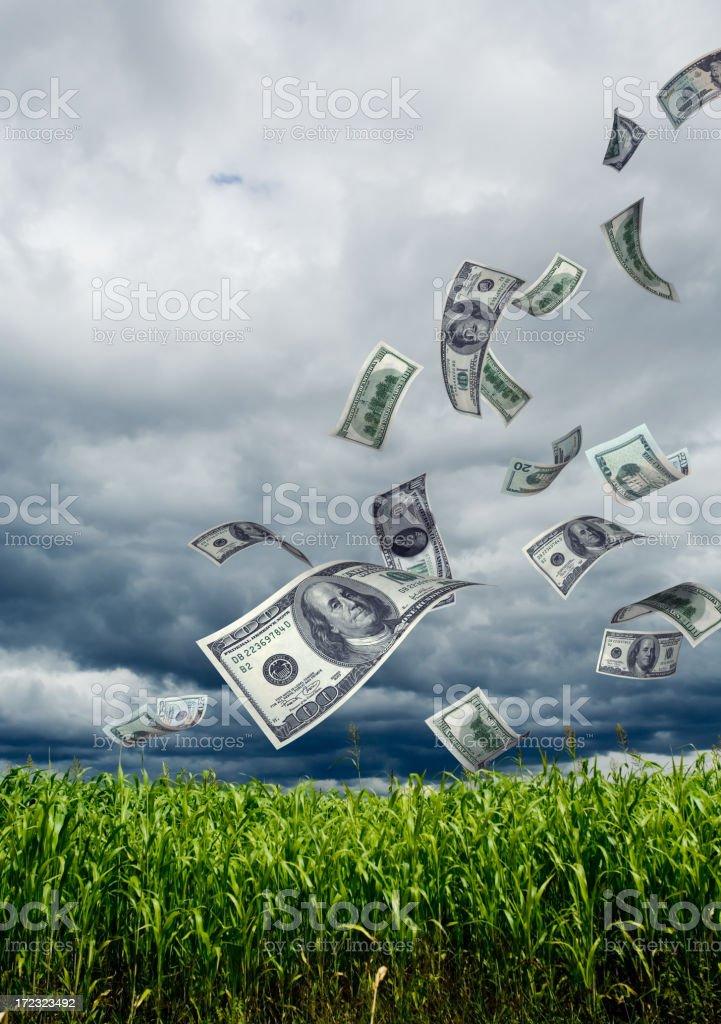 Money Falling into Corn Field royalty-free stock photo