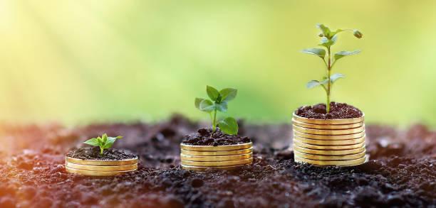 geld wachsendes konzept, geschäftserfolgskonzept, drei pflanzen, die aus geld, münze, gold wachsen. - europäische währung stock-fotos und bilder