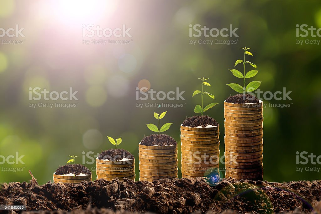 Geld wachsen im Boden Lizenzfreies stock-foto