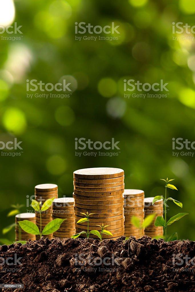 Money growing in soil. – Foto