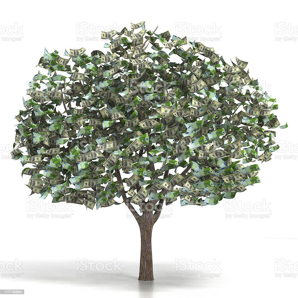 Money growing on a tree stock photo