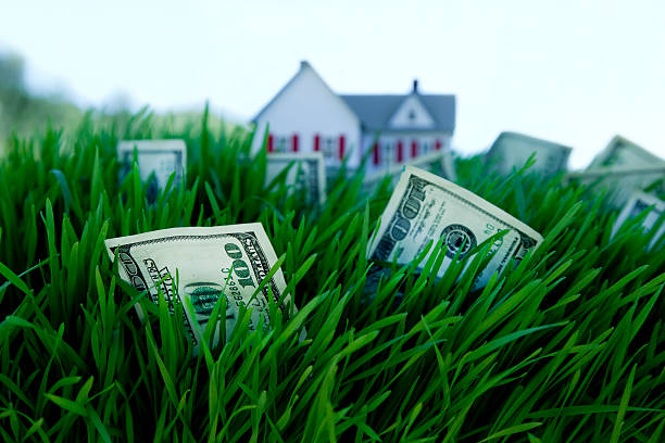 money growing on grass stock photo