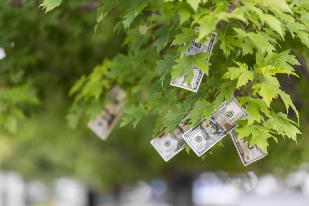 Money growing on trees Money growing on tree, USA currency dollar, cash crop, money tree, finance concept stock, investment, passive income, inheritance, loans, saving, money doesn't grow on trees money tree stock pictures, royalty-free photos & images