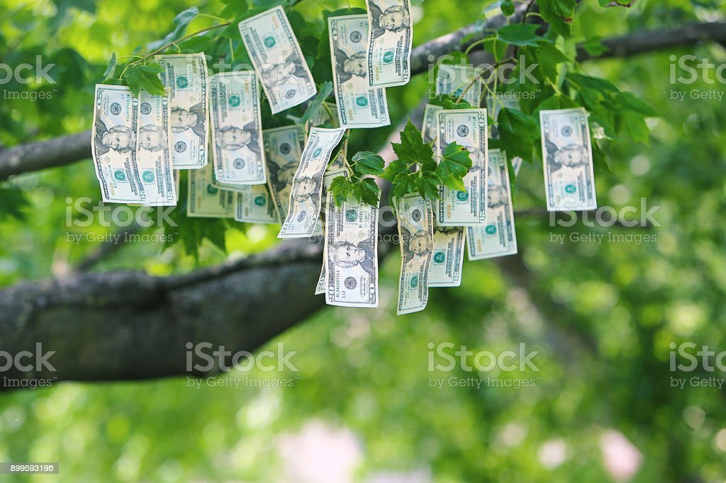 Money Growing on Trees stock photo