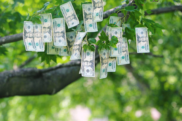 money growing on trees - spending money stock photos and pictures