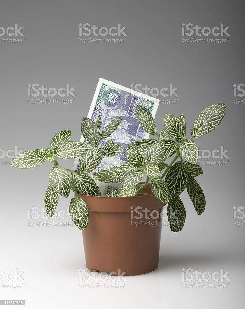 Money growing royalty-free stock photo