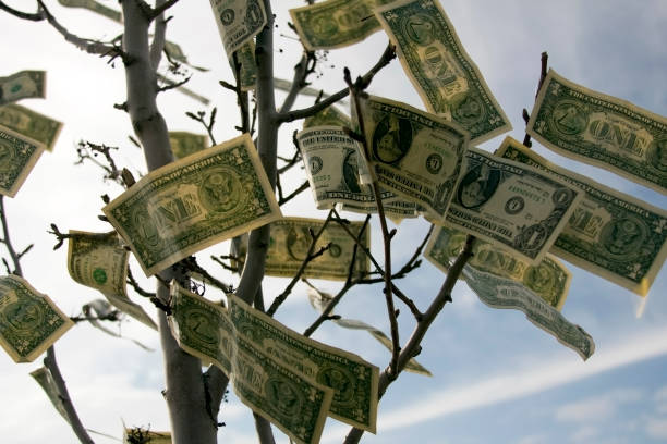 Money Grows On Trees  money tree stock pictures, royalty-free photos & images