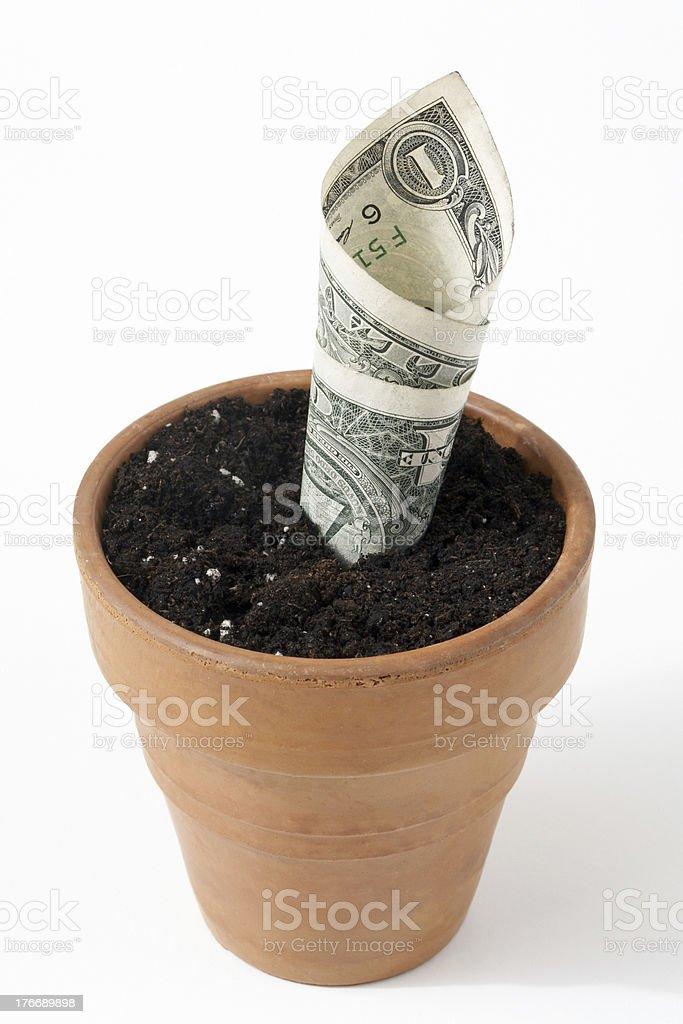 Money Grows royalty-free stock photo