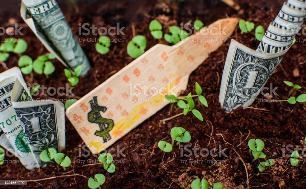 Money growth business finance savings and budgeting dollar bills growing with sprouting plants in organic soil stock photo