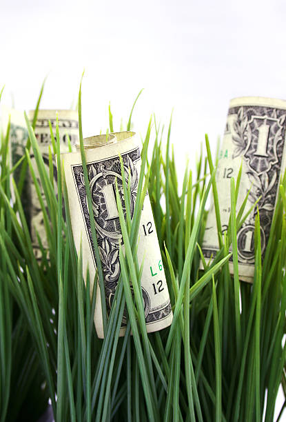 money growth - cash growing in the grass stock photo