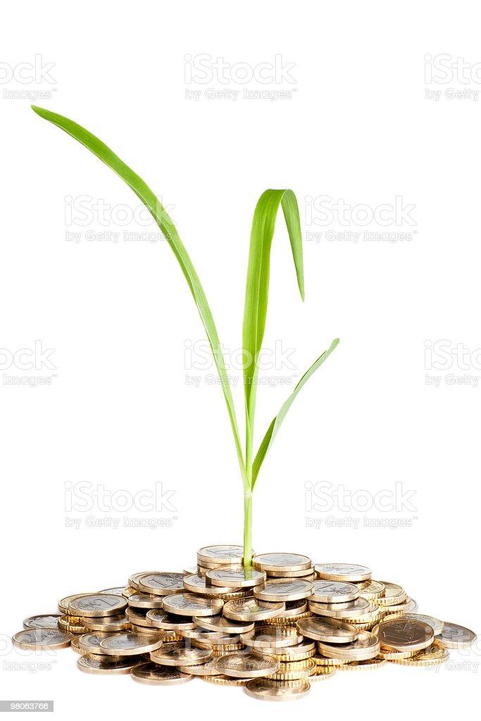 Soldi concetto di crescita foto stock royalty-free