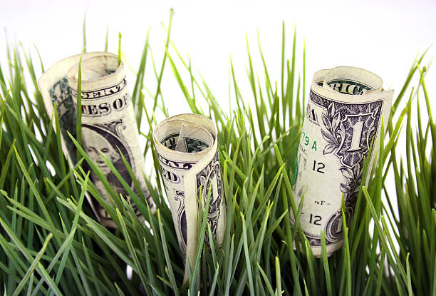 money growth - growing in the grass stock photo