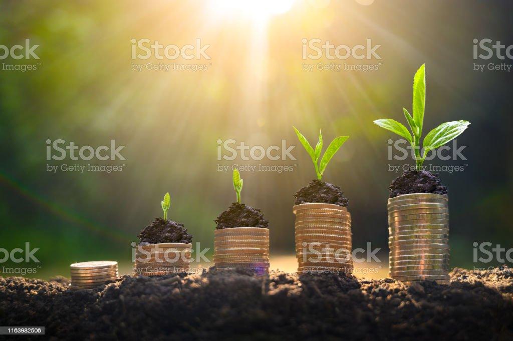 Para artışı para tasarrufu. Büyüyen iş kavramını gösterilen üst ağaç paraları - Royalty-free Altın - Metal Stok görsel
