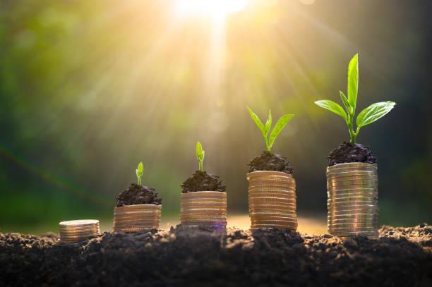 geldgroei bespaart geld. bovenste boom munten naar getoond concept van groeiende business - vooruitgang stockfoto's en -beelden
