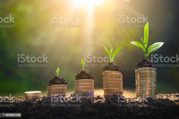 Photo of Money growth Saving money. Upper tree coins to shown concept of growing business