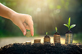istock Money growth Saving money. Upper tree coins to shown concept of growing business 1164588439