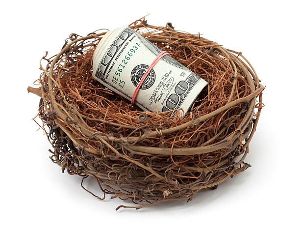 Money in bird nest Money in bird nest nest egg stock pictures, royalty-free photos & images