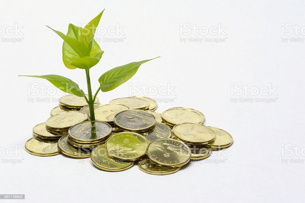 Money Investing Concept stock photo